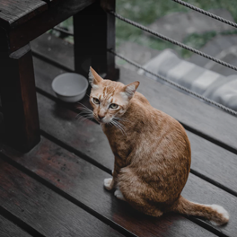 composite decking for pets