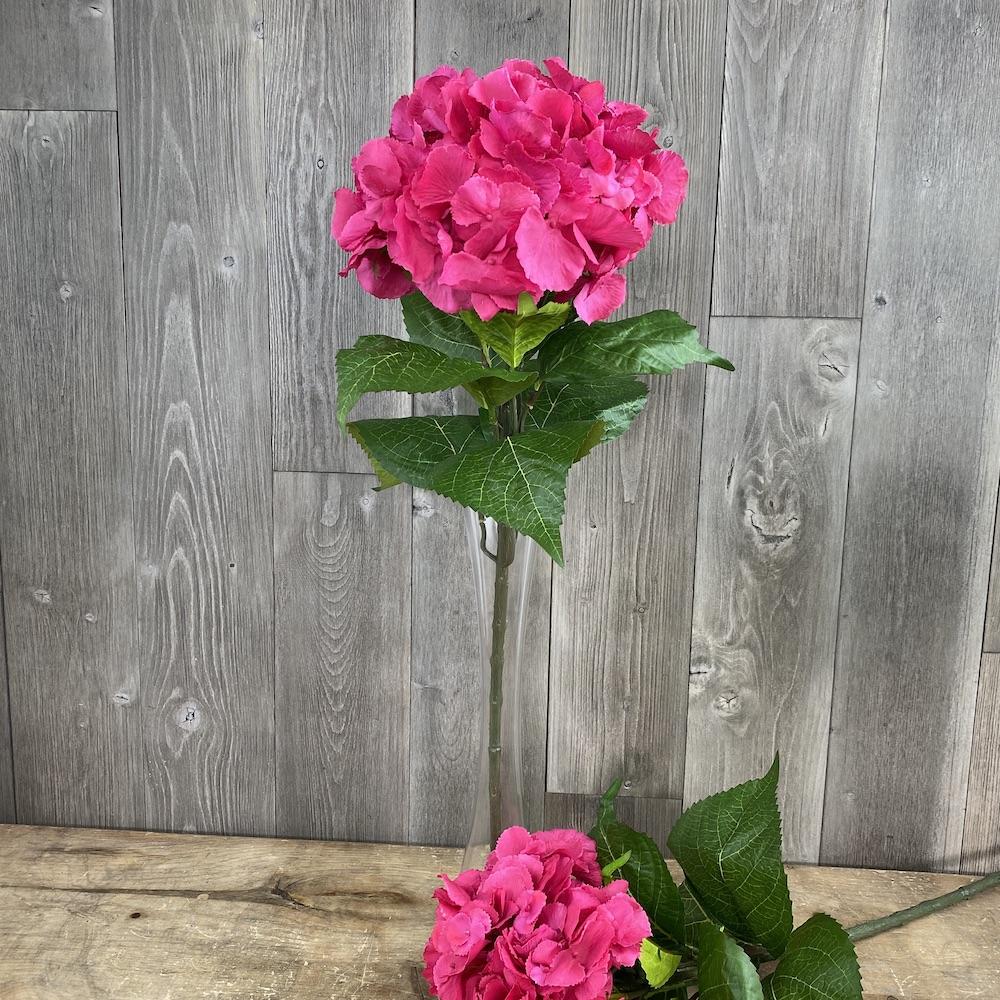 single stem Dark Pink hydrangea close up
