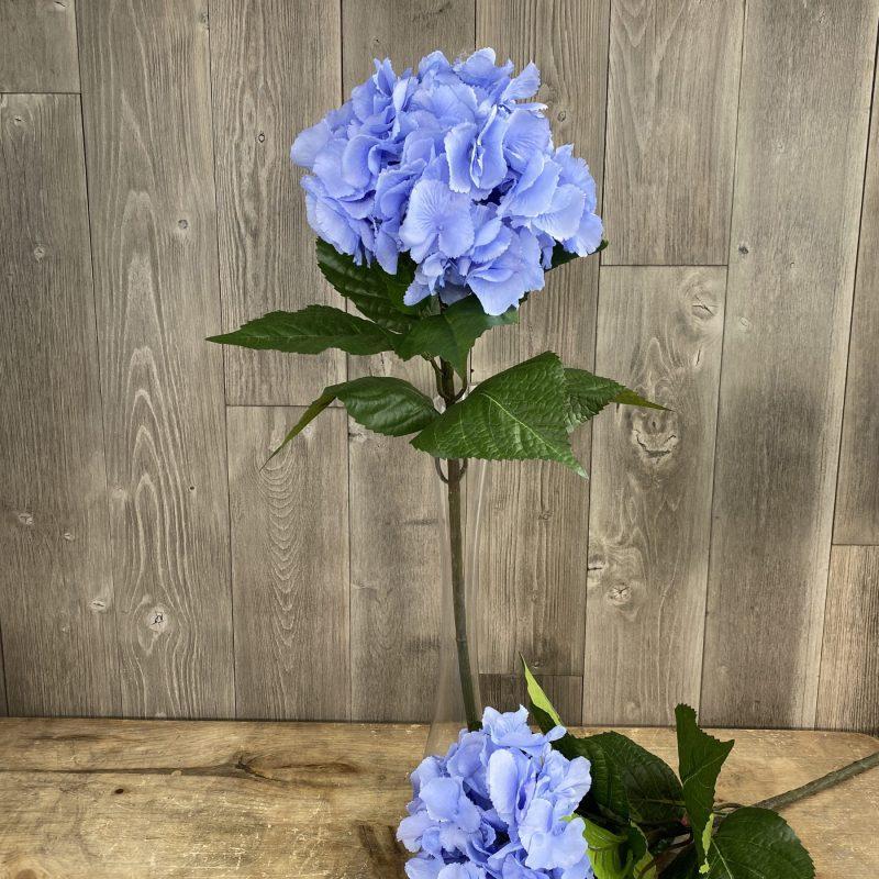Single Large Light Blue Hydrangea