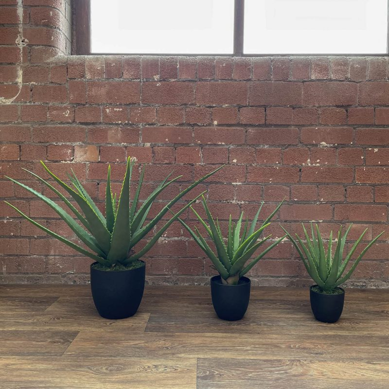 Artificial aloe vera plants lined up showing sizing